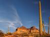 Picketpost & Saguaros