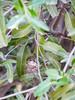 Hummingbird & Nest