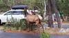 Elk near camp
