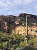 Saguaro and the mountain