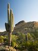 Saguaro and Yellow Rock
