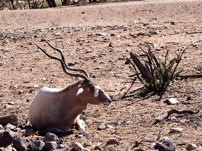 Swirled horns